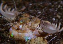 دودة عملاقة تحت البحر