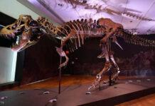 دراسة تيرانوصور
