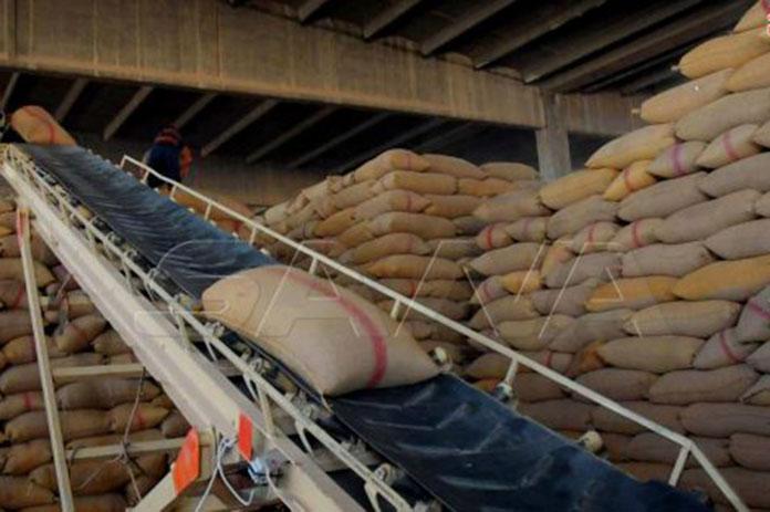 الفلاحون بريف حلب القمح